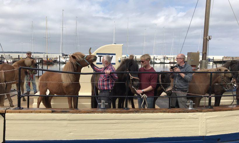 Hästar och och kor på plats